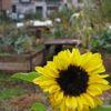jardin-coll-ixelles